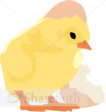 clip art easter chicken. Baby Chick and Cracked Egg