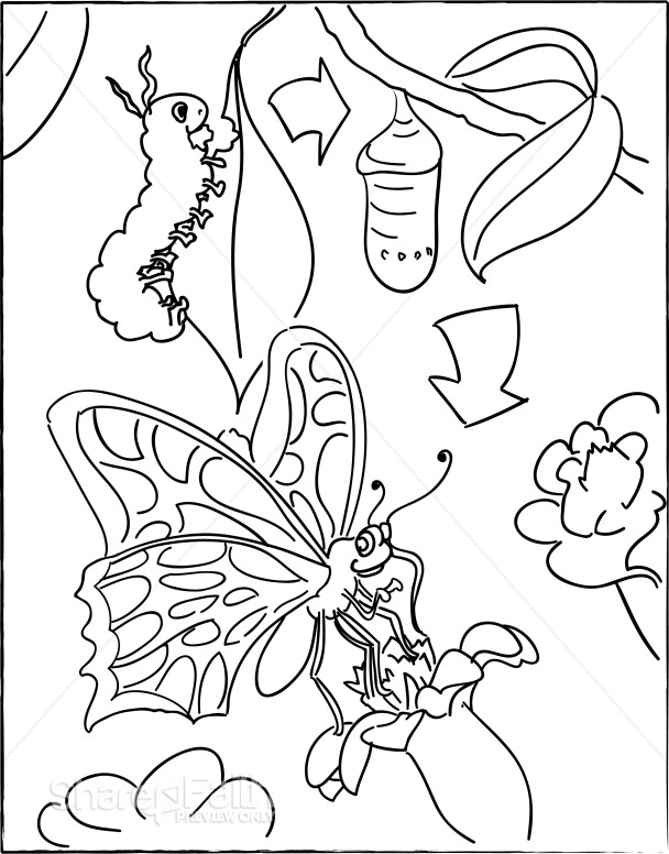 Coloring Page Butterfly Life Cycle