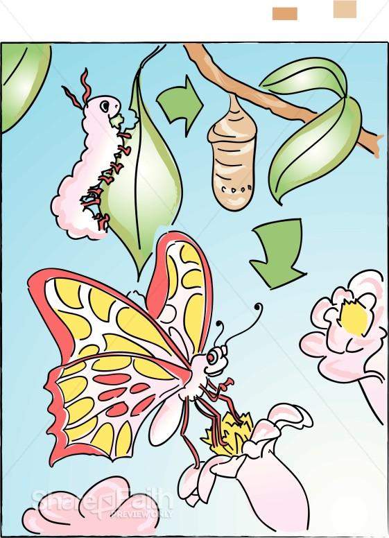 Cartoon Butterflies And Flowers
